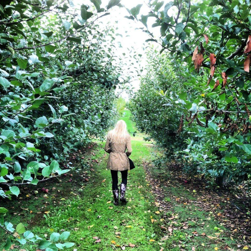 apple picking at greenbluff